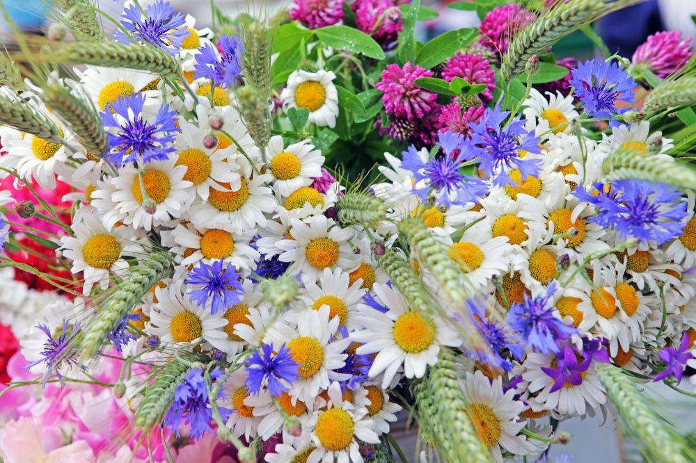 Открытка с днем полевых цветов